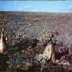 Socotra016