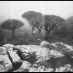 Socotra09